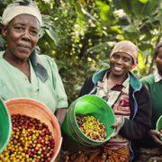 fairtrade-comercio-justo