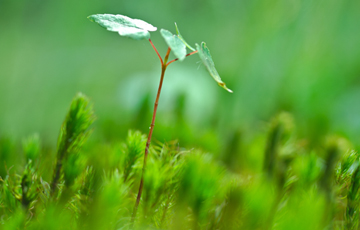 agricultura-hidroponica-sostenible